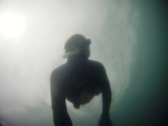 GOPR5919 (ambrogi_taubate) Tags: naturezaselvagem marinha mergulhando ubatuba sp brasil naturezamarinha fantstica apneia 10m setembro primavera 2016