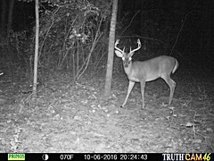 deer (moonshiner278) Tags: stag deer buck whitetail usa alabama america woods forest wildlife primos trailcam