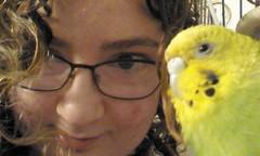 Budgie by my side (emargot22) Tags: budgie bird budgerigar pets animals kawaii cute