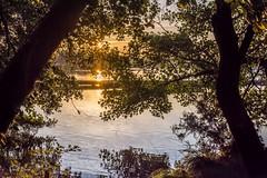 22102016-PBP_6088 (Berns Patrick) Tags: pins landes lac azur foret soleil matin ponton pigne