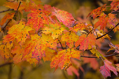Autumn (sarasonntag) Tags: season fall wisconsin dundee northern kettle moraine red yellow green autumn tree outdoor
