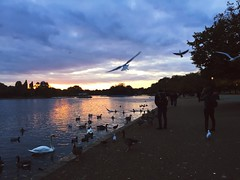 hyde park sunset (Bethan Pridmore) Tags: hydepark hydeparklondon sunset swans birds motio motion iphonephotography