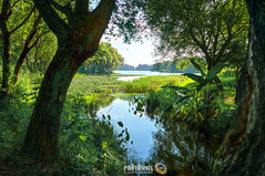 Nice Things at Maojiabu (Andy Brandl (PhotonMix.com)) Tags: landscape nikon d800 photonmix nature trees maojiabu westlake hangzhou tranquility water lake shore dof