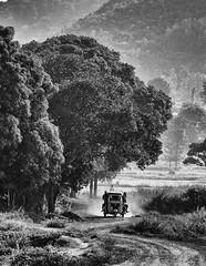How India Travels (Padmanabhan Rangarajan) Tags: araku villagers tribal rural india vizag valley nature scenery portraiture paddy