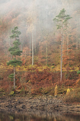 Trees in the Mist, Thirlmere, Lake District (MelvinNicholsonPhotography) Tags: thirlmere lakedistrict cumbria trees mist winter water reflections swirlingmist landscapephotography melvinnicholsonphotography gitzo manfrotto leefilters mindshiftgear