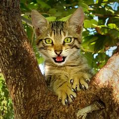 Holiday Kitten