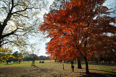 20161204-DS7_6559.jpg (d3_plus) Tags:  a05 wideangle d700 thesedays  architecturalstructure   kanagawapref   sky park autumnfoliage  japan   autumn superwideangle dailyphoto nikon tamronspaf1735mmf284dild  street daily  architectural  fall tamronspaf1735mmf284dildaspherical touring streetphoto  nikond700 tamronspaf1735mmf284 scenery building nature   tamron1735   tamronspaf1735mmf284dildasphericalif   autumnleaves