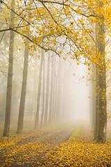 Pathway to Autumn (Stu Meech) Tags: tanworth arden tree lined avenue autumn fog mist nikon d750 70200 leefilters polariser stu meech warwickshire