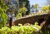 _MG_3690 (TobiasW.) Tags: spring frühling fruehling garden gardenflowers gartenblumen gärten garten blue mountains nsw australien australia backyard public