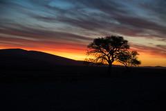 sunset @ dune 45 - sossusvlei - namibia (kusi@flickr) Tags: sunset dune 45 sossusvlei namibia afrika africa clouds orange night tree nikon d500