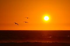 Sunset - Pacific Grove - California - USA (TravelMichi) Tags: usa2016 usa travel reisen pacificgrove california us