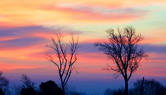 Sunrise Silhouettes (imageClear) Tags: silhouette beauty nature color sheboygan wisconsin nikon aperture imageclear flickr photostream deadwood two trees treeline d500 80400mm