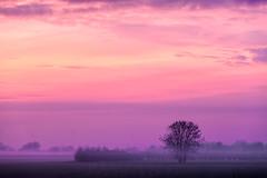 Tree Line Sunset 03 (Photograferry) Tags: sunset trees treeline evening twilight dusk landscape thefens cambridgeshire clouds red colourful scenics beautyinnature nopeople outside mist fog