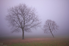 Two Trees (TheRonst) Tags: landscape morning fog trees winter outdoor mist tree