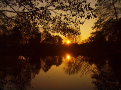 GOLDEN LIGHT IN nOVEMBER PB141470 (hans 1960) Tags: sun sunrise sonne sol soleil atardecer trees bume wasser water leaves bltter november spiegelung mirrow pond weiher nature natur outdoor germany landschaft landscape