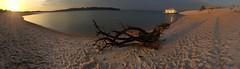 Stem to stern  .  .  . (ericrstoner) Tags: pontadecaracara rioarapiuns santarm par sunrise dongiuseppe beach praia driftwood sand areia boat barco vivnciatapajs amazon amaznia sandbar shadows water gua
