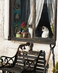 La maison des minettes! (dominiquita52) Tags: chats cats animals animaux window fentre banc bench