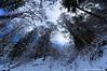 Mysterious forest (Johan Konz) Tags: mysterious mountain climbing forest trees matt cantonglarus switzerland snow outdoor landscape mountainside blue light sky mist fog alps nikon d90