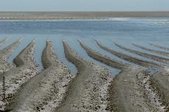 Pemba beach, Moambique (Sekitar) Tags: afrique africa mosambik moambique mozambique pemba beach