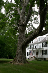old maple shading the lawn (wmpe2000) Tags: 2016 ct summer daytrip millerton ny millertonny sharon house colonial porch flag shutters white black tree maple acer sapindaceae soapberryfamily ordersapindales