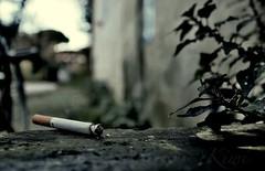 Una, Due, Tre Sigarette (kiwiofficiale) Tags: sigarette no fumo ambiente poesia photo simboli photographer chi lo sa pisa italy tuscany mondo meno di 18 anni