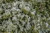 Erster Frost - 0004_Web (berni.radke) Tags: ersterfrost frost raureif wassertropfen rime eisblumen eiskristalle iceflowers icecrystals escarcha