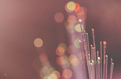 fairy fingers (rockinmonique) Tags: christmas light bokeh pink gold macro magical ethereal moniquew canon canont6s tamron copyright2016moniquewphotography