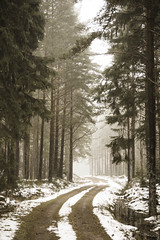 Misty road (A blond-Tess) Tags: road countryside rural firtrees trees misty november sweden swedish canonphotography outdoorphotography outdoors tessaxelsson snowy snow winter fog mistyroad 7d sigma1750mmf28 sandshult småland kalmarlan scandinavia skandinavien