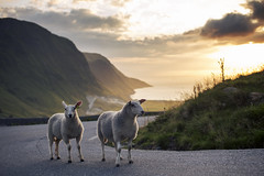 6th December (MargitHylland) Tags: selje sunset sognfjordane norge norwegen stadtlandet hoddevika sheep view summer sonne sumar sauer