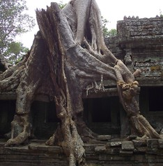 ANGKOR TEMPLES TREES (patrick555666751) Tags: angkortemplestrees angkor temples trees tree arbres arbre arboles flickr heart group asie du sud est south east asia cambodia cambodge camboya kambodscha cambogia camboja cambodja