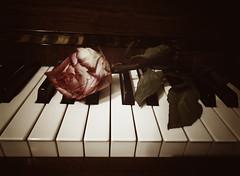 The Rose (Stillhet A.) Tags: rose piano melancholy darkart