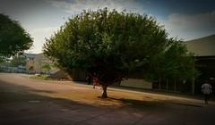 uma boa sombra 1 (luyunes) Tags: arvores sombra sol estaçãoestácio riodejaneiro metrôrio motomaxx luciayunes