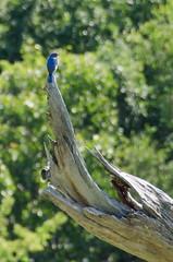 Mashomack62313-1088.jpg (VividVisionsPix) Tags: landscape wildlife mashomack summersunny zitek lightpainters