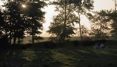 Nebel im Osten von Wohlde; Stapelholm (12) (Chironius) Tags: stapelholm schleswigholstein deutschland germany allemagne alemania germania   ogie pomie szlezwigholsztyn niemcy pomienie morgendmmerung morgengrauen  morgen morning dawn matin aube mattina alba ochtend dageraad  amanecer nebel gegenlicht wohlde baum bume tree trees arbre  rbol arbres  rboles albero  rvore aa boom trd sonnenaufgang sunrise zonsopgang  morgens dmmerung fog brouillard niebla silhouette