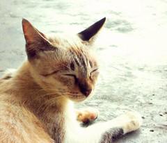 si miow merajuk tiada ikan (PieceOfMindArt) Tags: animal cat nikon coolpix s3000