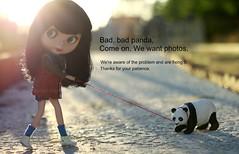 Bad, bad panda ~