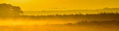 Geese in Flight (mayaplus) Tags: orange sunrise geese norfolk