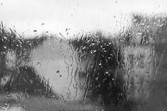 pluie (deflandre vincent) Tags: white black canon eos noir pluie blanc 1100d