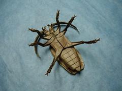 Titan Beetle (shuki.kato) Tags: paper origami view bottom beetle super bugs underside fold masters titan complex kato shuki
