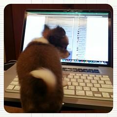 หมาตูหัดเขียน Blog ละ