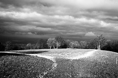 Fields of sorrow, fields of joy (Nekr0n) Tags: leica schnee trees blackandwhite bw snow nature monochrome digital germany deutschland blackwhite meadow x 24 28 24mm freiburg schwarzweiss schnberg schwarzwald asph f28 x1 compactcamera xseries elmarit primelens ebringen imbreisgau leicax1gallery