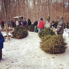 Log jam at the tree farm (Dani_Girl) Tags: editorial rm flickrvision