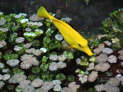Nausicaa (Quentin S Photography) Tags: mer poisson nausicaa ocan mduse