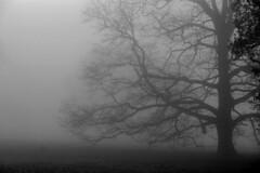 (Alejandro Benesey) Tags: naturaleza mist tree nature arbol niebla brockwoodpark