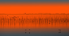 As it could have been - 2 (Wim Koopman) Tags: blue sky orange holland reed water netherlands dutch birds photography flying photo nikon branches horizon stock zeeland stockphoto oosterschelde tholen d90 oesterdam