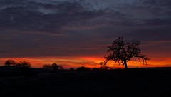 Stand Out (ernogy) Tags: california ca longexposure sunset sky orange usa foothills tree nature colors silhouette northerncalifornia clouds sunrise canon landscape outdoors photography landscapes oak scenery colorful folsom prairie oaks oaktree ernogy