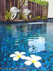 Anantara Villas,  Phuket ,Thailand (_baderalbader_) Tags: blue flower water pool rose canon thailand bahrain nikon uae tortoise kuwait phuket oman kuwaitcity qatar q8  ksa wordstoliveby       seetheworld  kuwaitphotographers    q8photo bestnatureshots   worldcaptures  landscapecaptures millusion kuwphoto q8typic watanpic baderalbader   screamingshots doyoutravel photoq8
