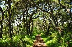 Tree tunnel (Just Peachy!) Tags: california bigsur andrewmolerastatepark