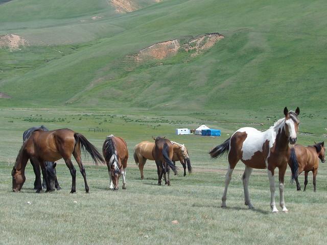 Rodamundos: Kazakstan. Historia de visas.