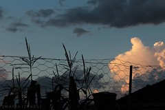 [ ESCURECENDO ] (.M A R I A I Z A B E L.) Tags: canon canoneosrebelt5 canonphotography canoneos1200d efs1855mmf3556iii sky sunset clouds nuvens crepsculo fence plants nature shadows
